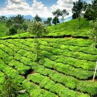 Bangalore-Mysore-Ooty 4N5D Tour