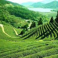 Gangtok/Darjeeling(6Nights/7Days Package)