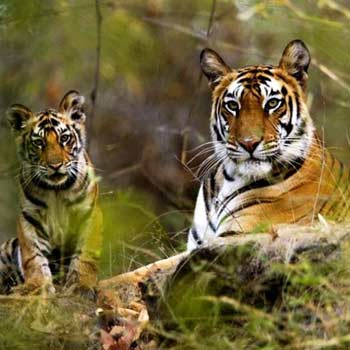 3 Days Kanha Tour Package