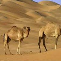 Sultanate Of Oman Tour