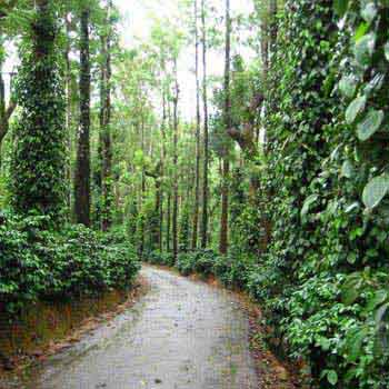 Coorg Plantation Stay Tour