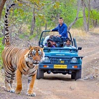 Short Escape to Ranthambore Tour