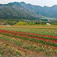 Srinagar -Nubra- Pangong- Leh Tour Package (08 Nights / 09 Days)