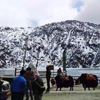 Beautiful Darjeeling Gangtok Tour