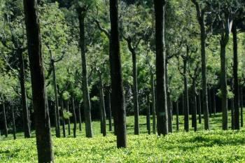 Mysore - Ooty - Coonoor- Kodai  Tour