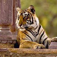 Golden Triangle Tour With Ranthambore 06 Nights / 07 Days