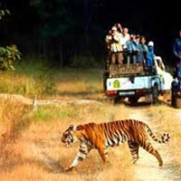 Delhi Jim Corbett Taxi/Cab Tour : 2 Days /1 Night Trip