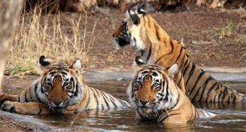 Weekend Sariska Tour Package