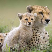 5 Days Mid/Range Camping Safaris Tour
