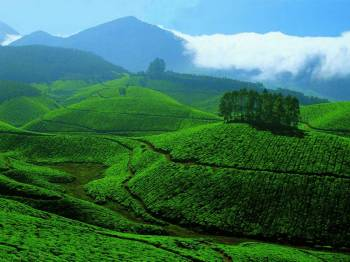 Munnar Tour Package3 Days & 2 Nights