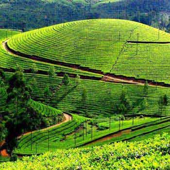 Tour package for Bangalore - Mysore - Ooty - Bangalore