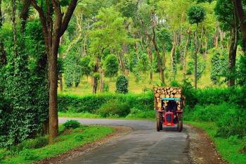 Bangalore - Coorg - Bangalore (02 nights 03 days)