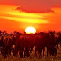 Fourteen Falls Day Trip from Nairobi Tour