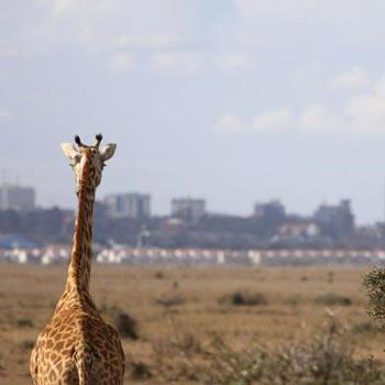 Nairobi National Park, Nairobi Safari Walk and Animal Orphanage Tour