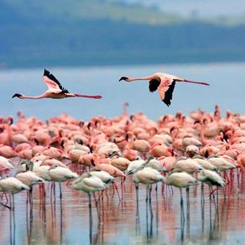 Day Trip - Lake Nakuru National Park Tour