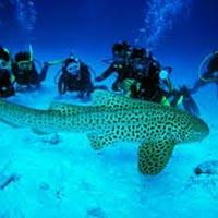Islands Tour Of Andaman