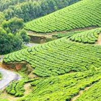 Kerala Honeymoon Package 4 Day