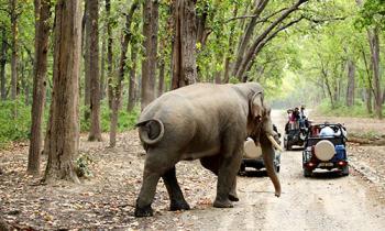 Uttarakhand Tours