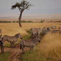 Classic Luxury adventure Kenya - Tanzania Safaris Tour