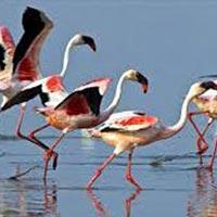 Somnath to Gir National Park Tour