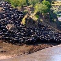 3 Days Masai Mara Joining Safari Tour