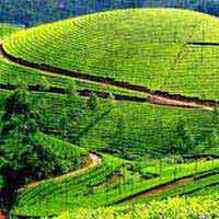Kerala Tour 5Nights/6Days