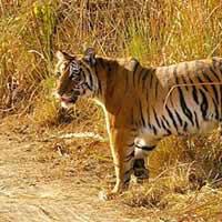 Wildlife Tour With Nainital