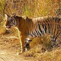 Sensational Uttarakhand Tour