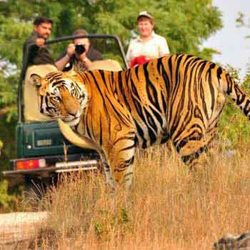Haridwar Rishikesh Corbett Ranikhet Nainital Tour 5 Nights /6 Days- 6 Days