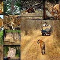 Rajasthan Wildlife Packages 06 Nights / 07 Days