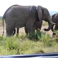 7 Days Most Popular Uganda Safari