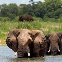 Mobile Safaris Tour