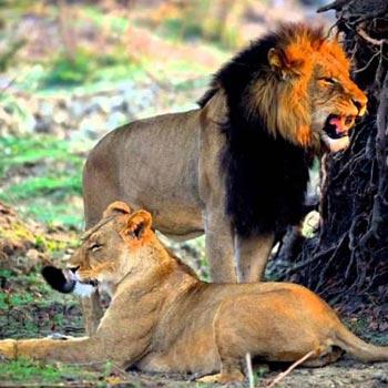 Zambia –LIKUMBI LYA MIZE Cultural / Naturalistic safari Tour