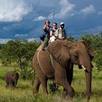 Wildlife Elephant Back Safari Tour