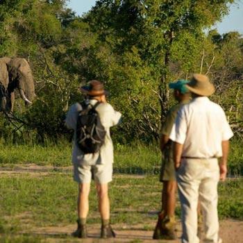 Walking Safaris Tour