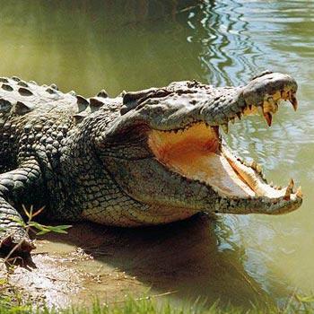 Crocodile Farm Tour