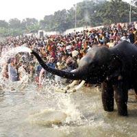 Sonpur Festival Bihar Tour