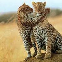 10 Days Best Of Kenya Safari Package