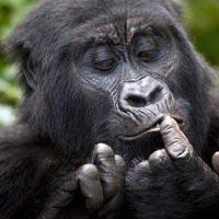 3 Day Uganda Gorilla trekking tour