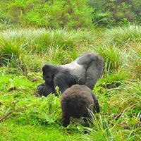 3 Days Rwanda Gorilla Tracking Safari Tour