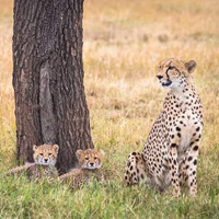 3 Days 2 Nights Maasai Mara Tour