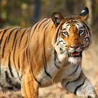 Temples and Tiger Tours