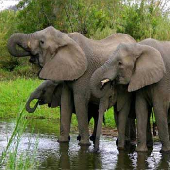 South Africa  9 Nights / 10 Days Tour