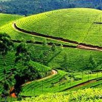 Misty Munnar Tour Package Tour