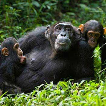 Uganda Gorilla And Wildlife Safari Tour