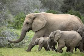 South Africa Wildlife Tour Package from India