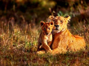 Kenya Wildlife Tour Package from India