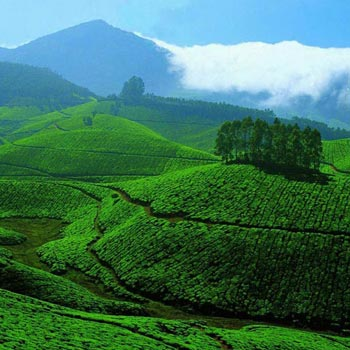 Spice & Plantation of Kerala Tour