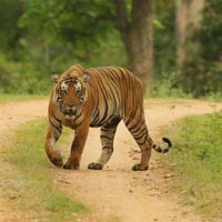 Delightful Coorg with Kabini Tour