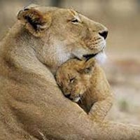 Gir Wildlife Tour Package